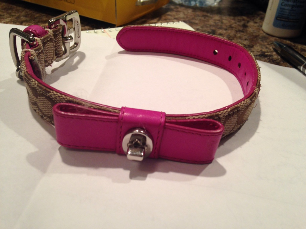 Coach Dog Collar Small
