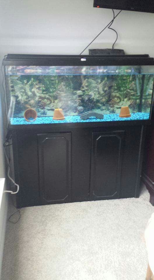 Letgo 55 gallon fish tank with stand in eastside fl for 38 gallon fish tank