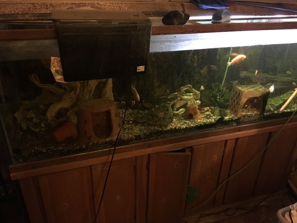 Letgo 180 gallon fish tank and stand in independence mo for 180 gallon fish tank