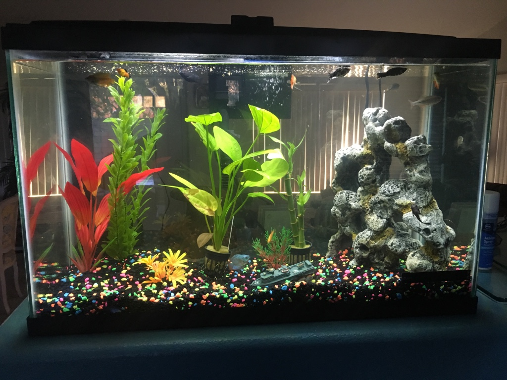 letgo 30 gallon fish tank new in college park nv