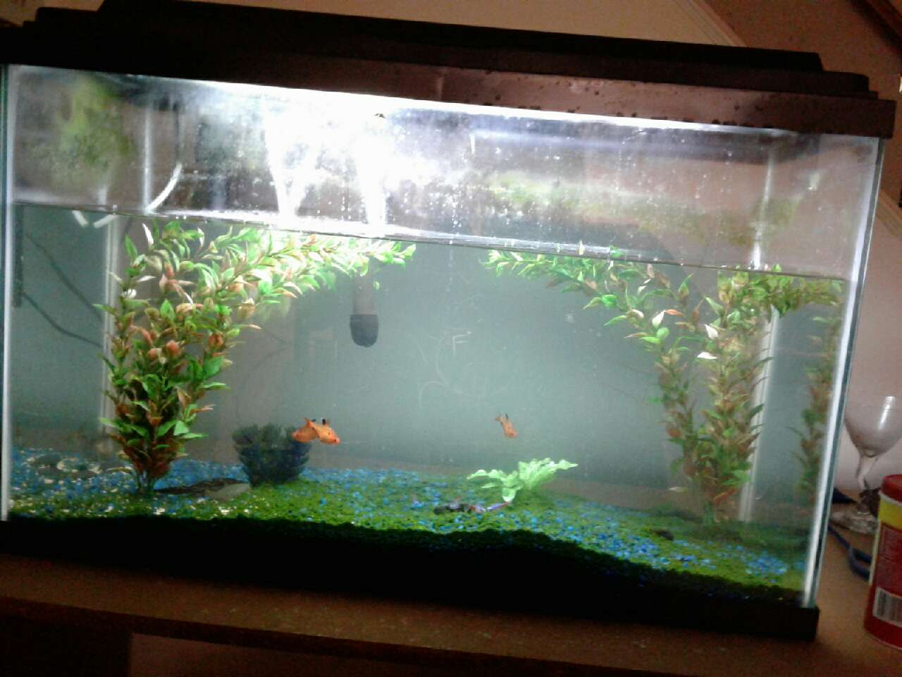 Letgo 29 gallon fish tank in parkland pa for 29 gallon fish tank